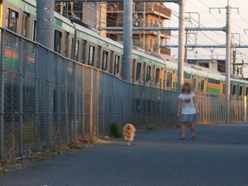電車と競争