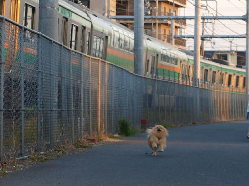 電車と競争!