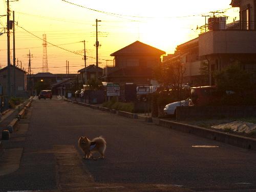 夕日が沈むよ