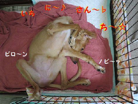 a_2013082800000857a.jpg