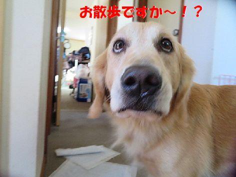 a_20131001074242fe0.jpg