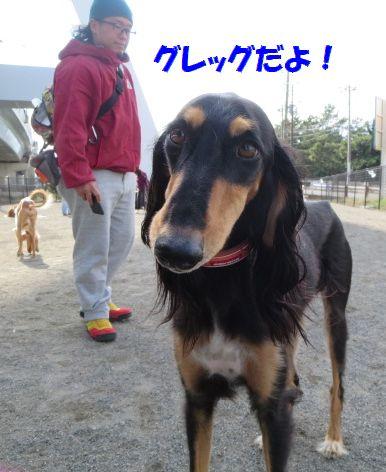 a_201311122358577bd.jpg