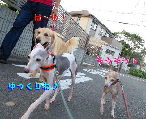 b_20130730075234.jpg