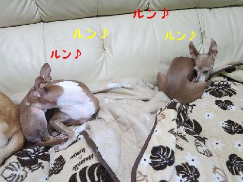 b_2013082800000755d.jpg