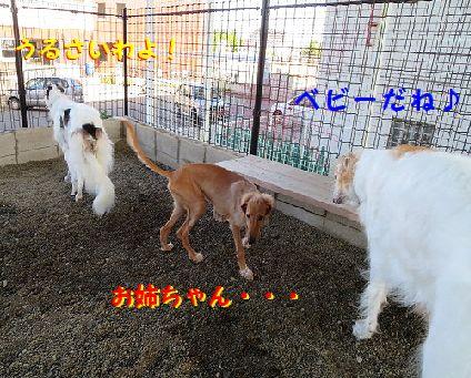 b_20130903231920137.jpg
