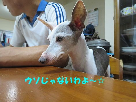 b_2013091823024097a.jpg