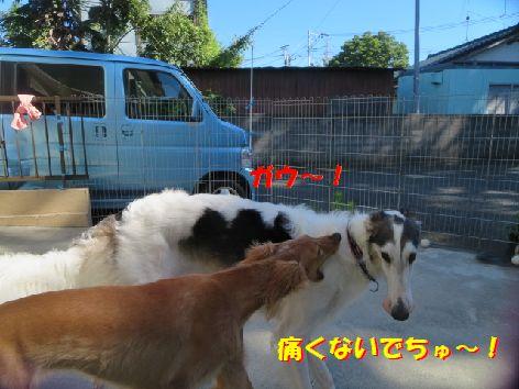 b_20131004075507f80.jpg