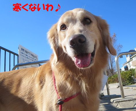 b_20131122011609911.jpg