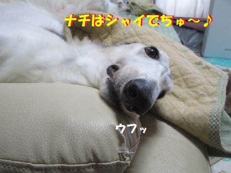 d_201309261944029c6.jpg