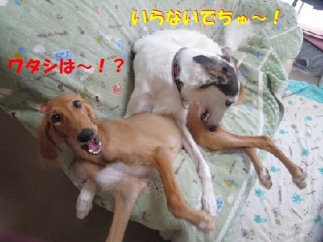 d_201309270740145b1.jpg