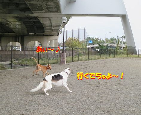 d_201310251936013c2.jpg