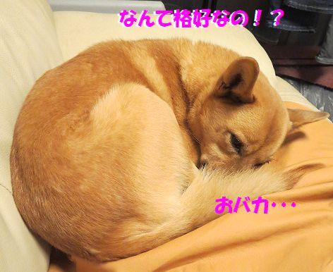 d_2013111400023081f.jpg