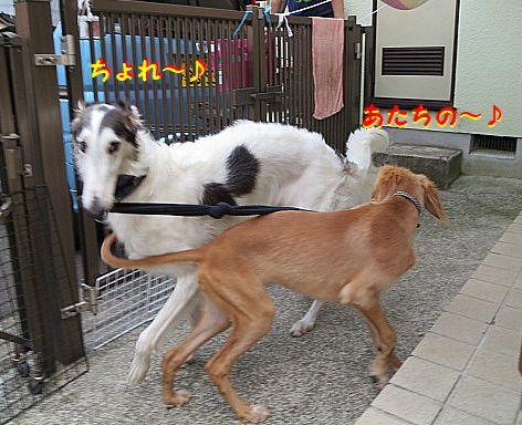 f_201308142220362cc.jpg