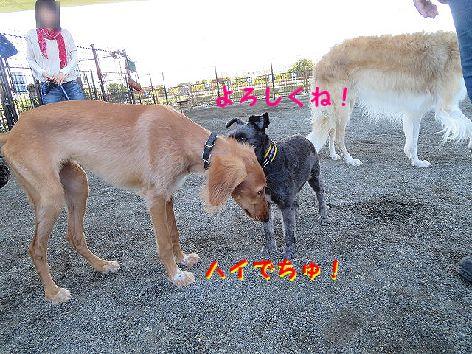 f_20130903231916830.jpg