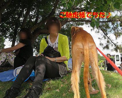 f_20130915231332416.jpg