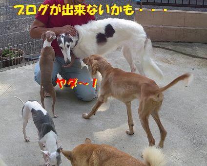 f_20130923095609175.jpg