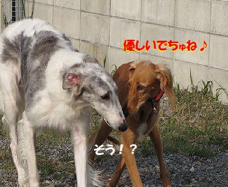f_2013110423252803d.jpg