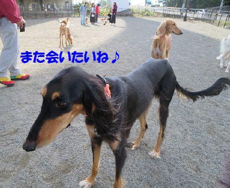 f_20131112235853adc.jpg