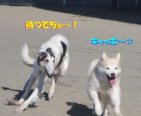 f_2013112201160625b.jpg