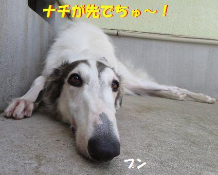 g_201309261944375b9.jpg