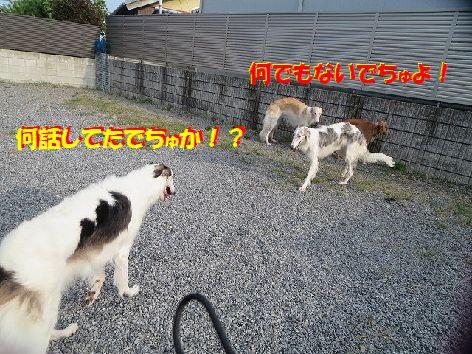 g_20131104232550b6f.jpg