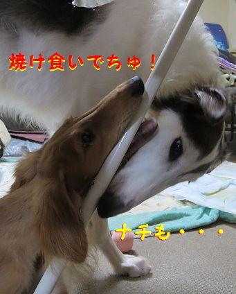 j_20130826231123fac.jpg