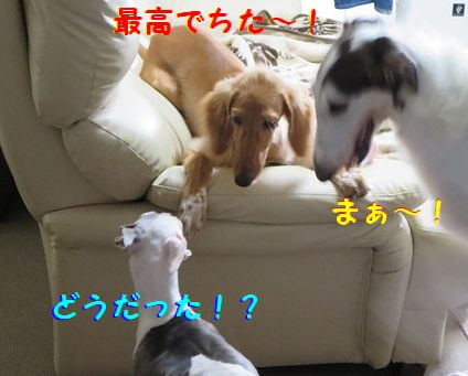 l_2013090323195139c.jpg