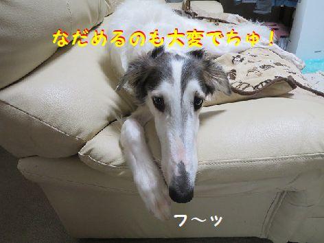 n_201308262311471de.jpg