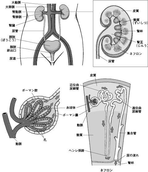 今日は夜間部1年の解剖生理学の...
