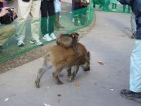 動物園_convert_20101230180142