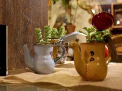 カトリエム観葉植物フェア×Re-style-1