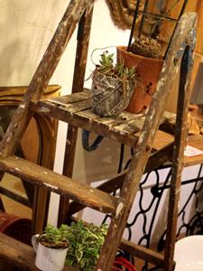 カトリエム植物フェア×リスタイル