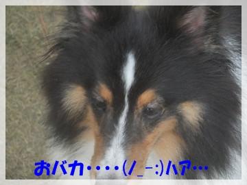 sDSCF4704.jpg