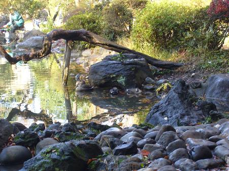有栖川公園1