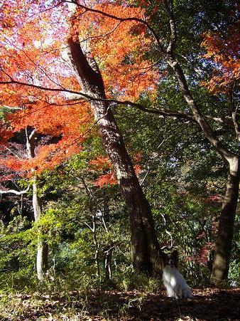 りっくん@有栖川公園5