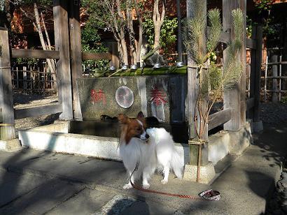 亀岡八幡宮11