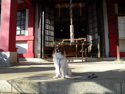 亀岡八幡宮9