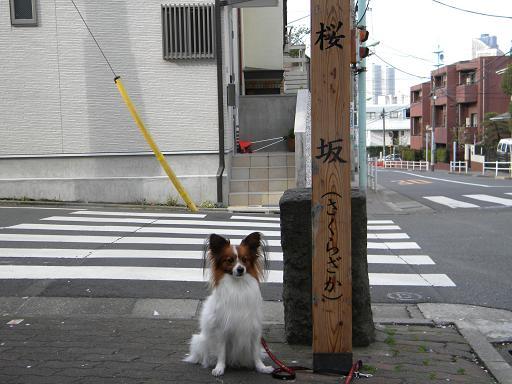 桜坂碑にて