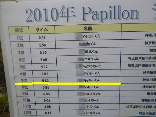 パピヨンランキング表2