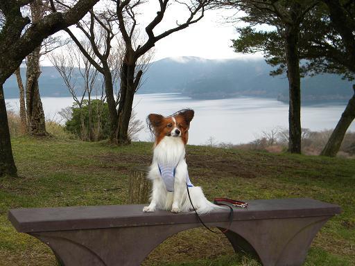 芦ノ湖とリッキー