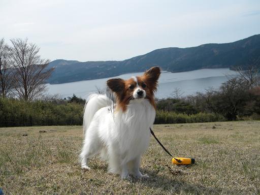 芦ノ湖とリッキー2
