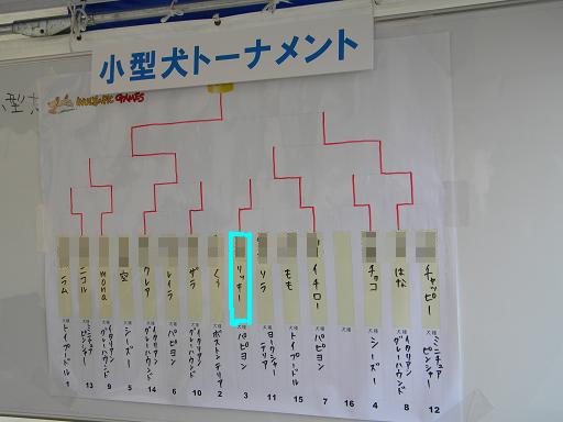 小型犬トーナメント表