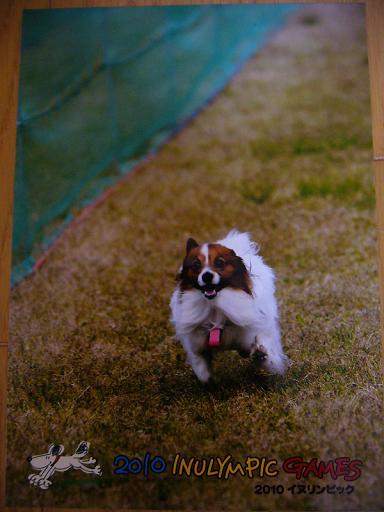 小型犬トーナメント