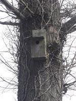 やまがらの巣