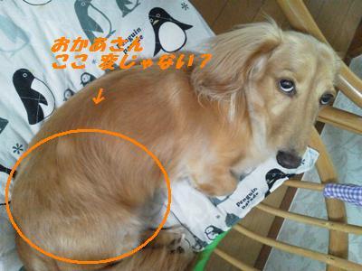 NEC_0026_20110816210556.jpg