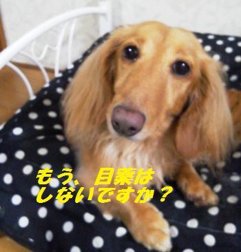 NEC_0028_20120210205712.jpg