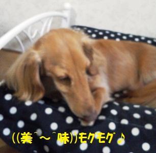 NEC_0042_20120215092019.jpg