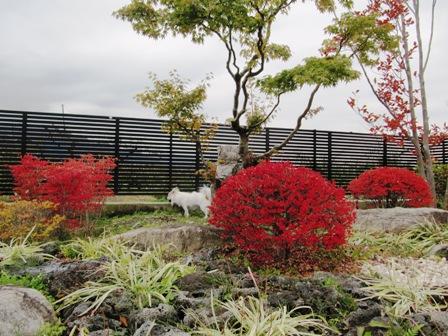 お庭の紅葉4