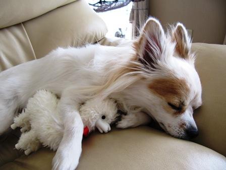 アルパカくんと寝んね。