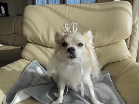 どうも、私が王様です。